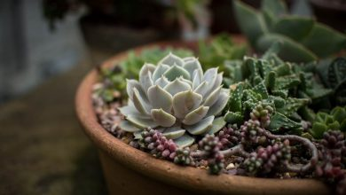 Photo of How to Create a Succulent Arrangement for Your Home?